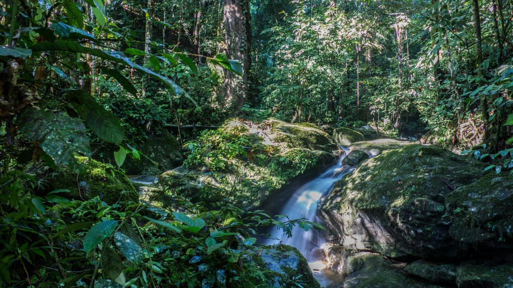 frogs Mt Kinabalu (2 of 8)
