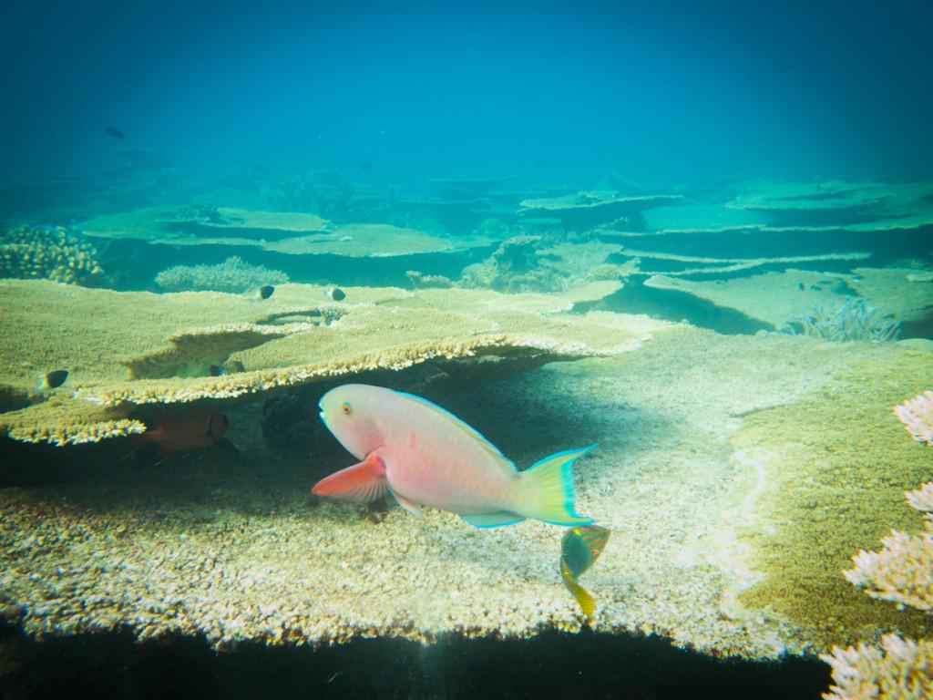 maldives (18 of 36)