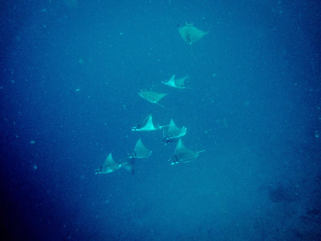 maldives (19 of 36)
