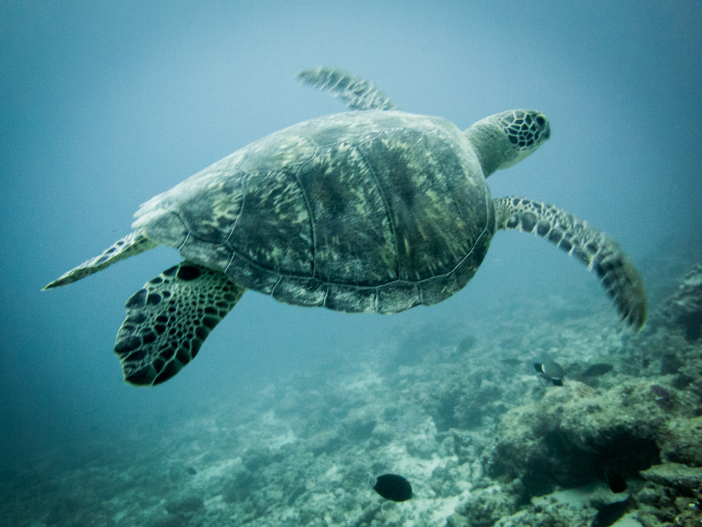 maldives (27 of 36)