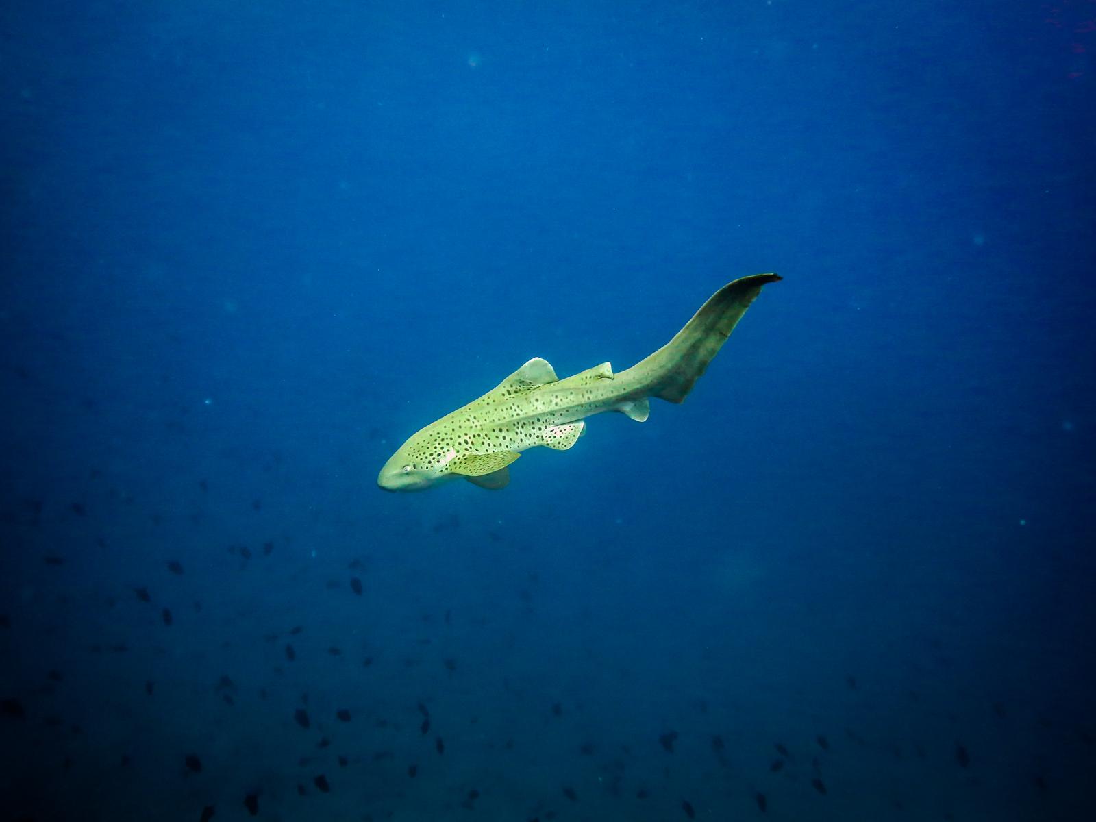 malediven 2014 (10 of 14)