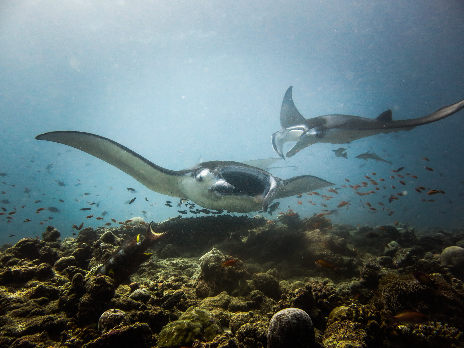 malediven 2014 (6 of 14)