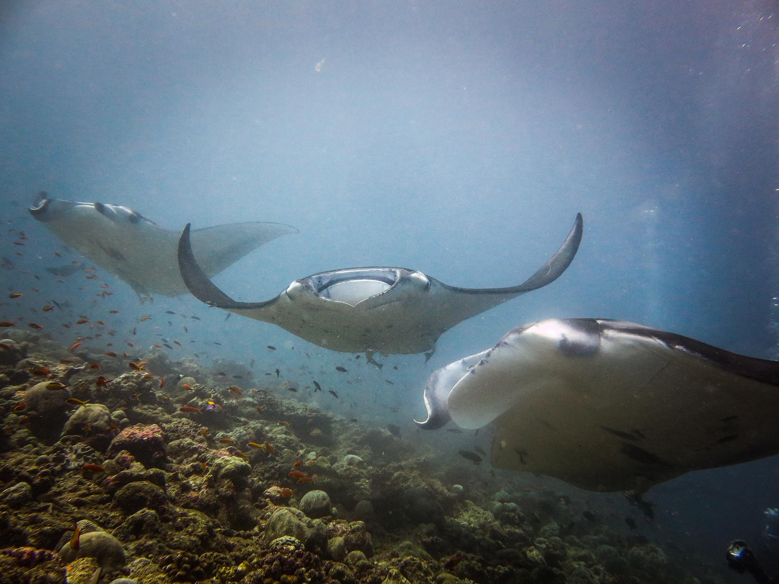 malediven 2014 (7 of 14)