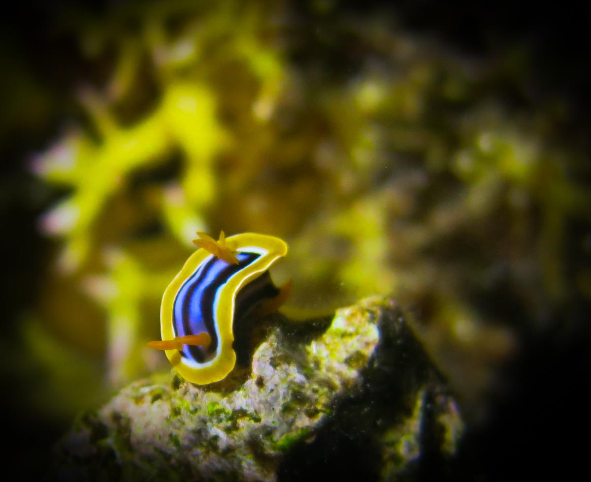 red sea safari (1 of 1)