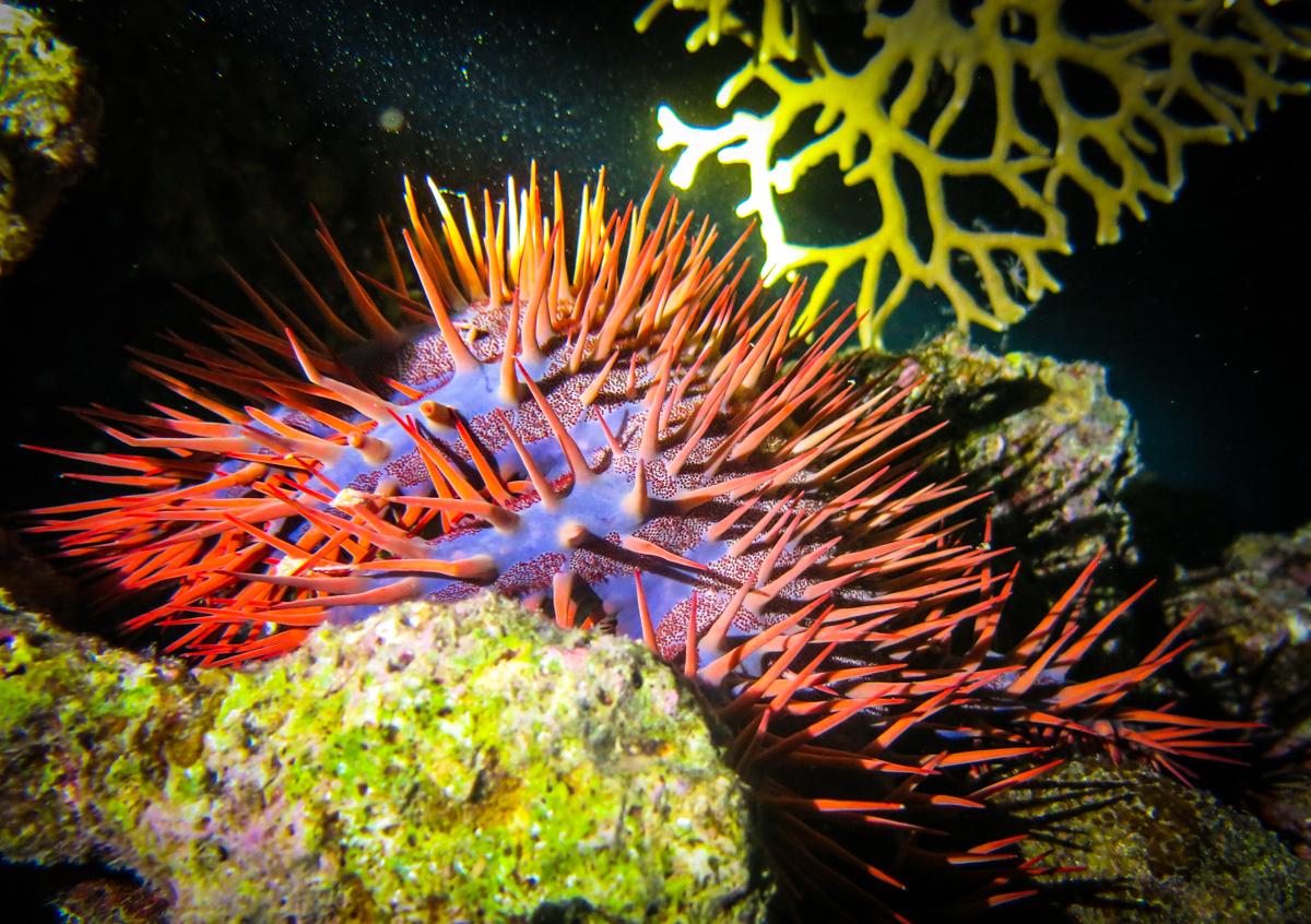 red sea safari (4 of 11)